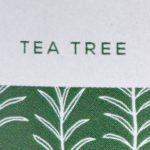 Árbol del té